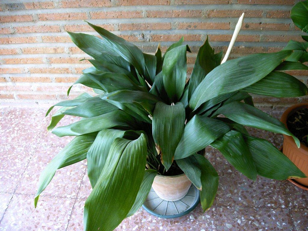 Растения темных помещений