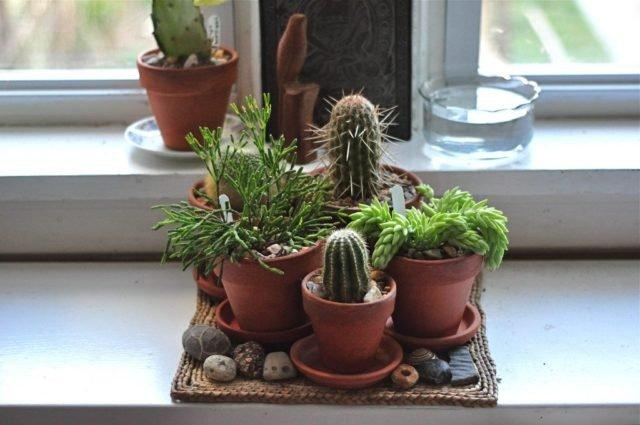Растения солнечного окна